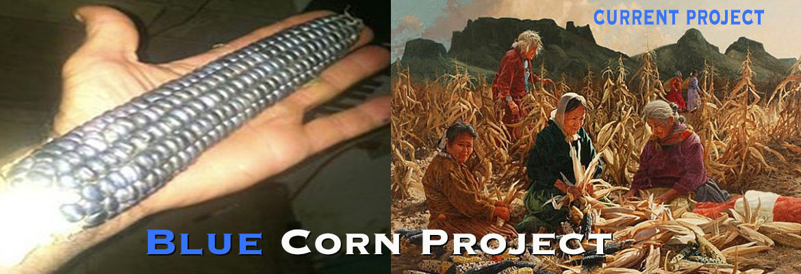 The BLue Corn Project