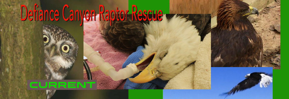 Defiance Canyon Raptor Rescue